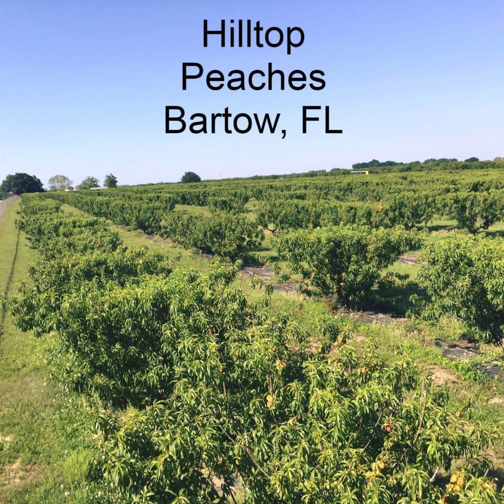 Hilltop Peaches.jpg