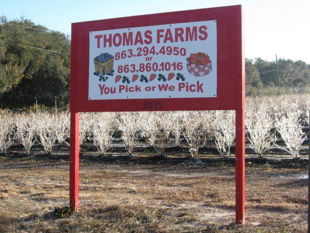 Thomas Farms Blueberries.jpg