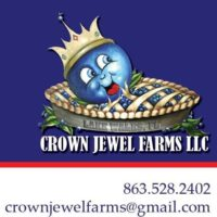 Crown Jewel Organic Blueberries.jpg