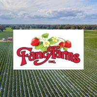 Fancy Farms Strawberries.jpg