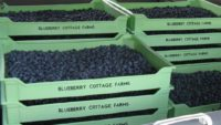 Blueberry Cottage Farms.jpg