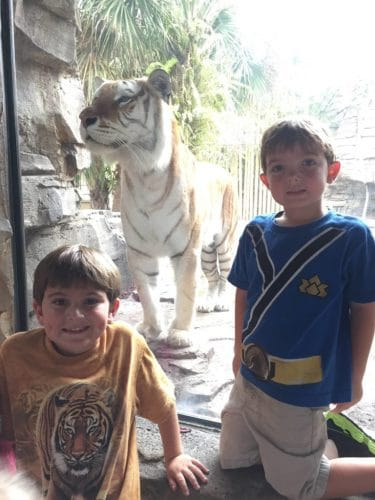 boys with tiger at Busch Gardens Florida