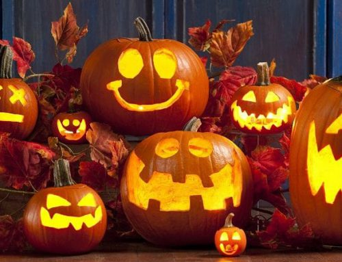 Fall & Halloween Activities: Pumpkin Patches, Corn Mazes, Halloween Events & More