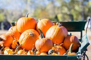 Pumpkin Patches Lakeland