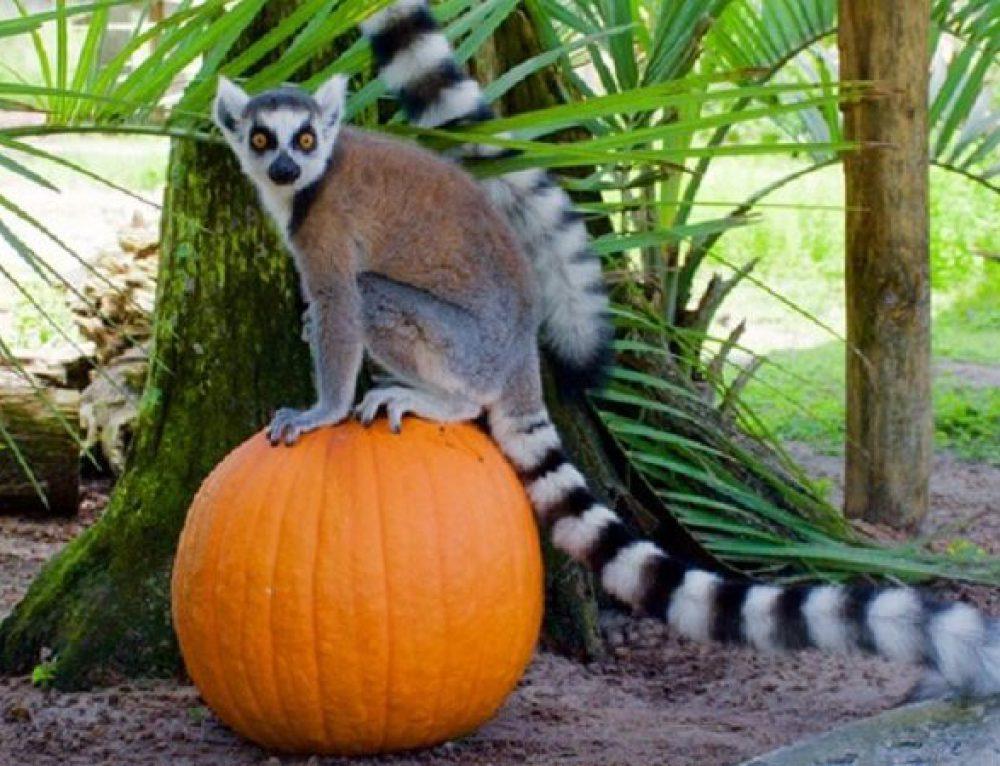 Fall Family Fun: Pumpkin Safari Experience at Safari Wilderness Lakeland