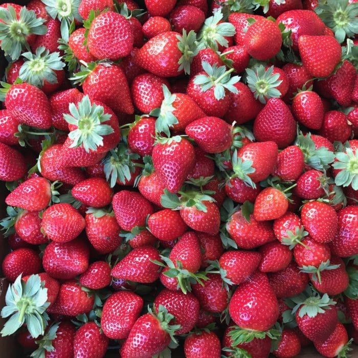 Strawberry Picking Plant City