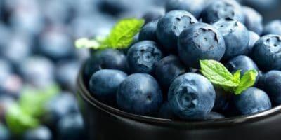 UPick Blueberries Lakeland