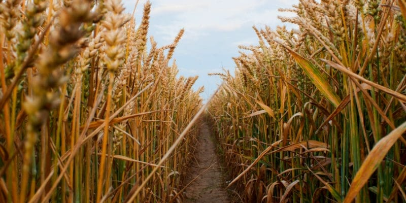 Fall & Halloween Corn Maze Farm Lakeland