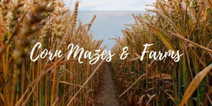 Lakeland Corn Mazes