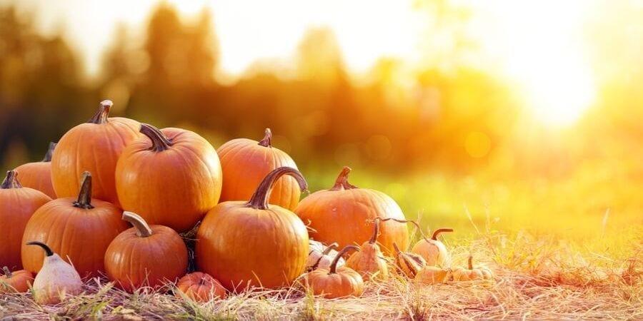 October Top 10 Activities Lakeland FL