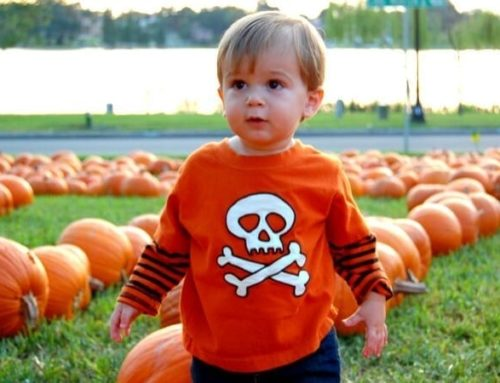 Pumpkin Patches in Lakeland & Polk County