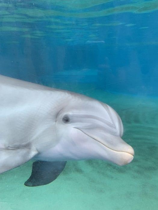SeaWorld Orlando dolphin