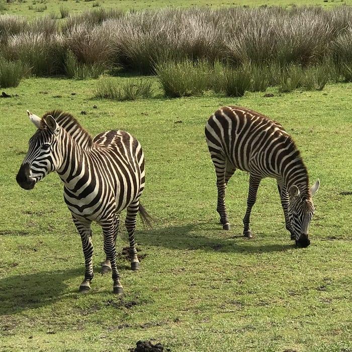 Safari Wilderness Lakeland 3