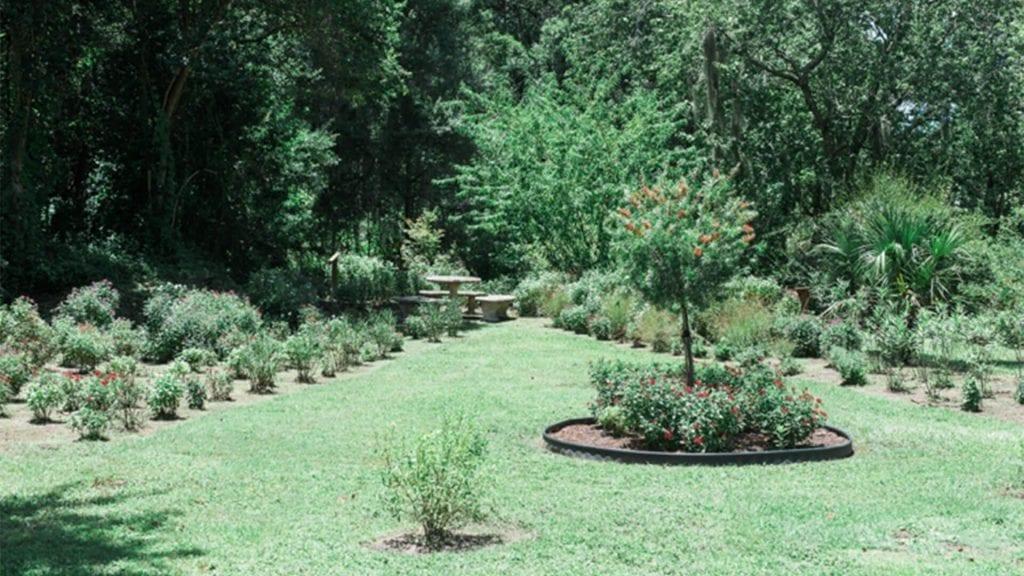 Mulberry Butterfly Garden