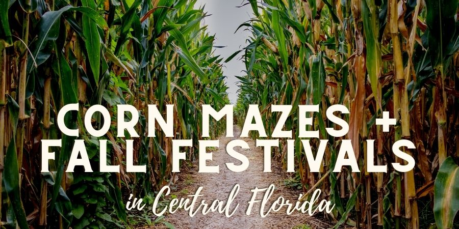 Corn Mazes Lakeland Central Florida