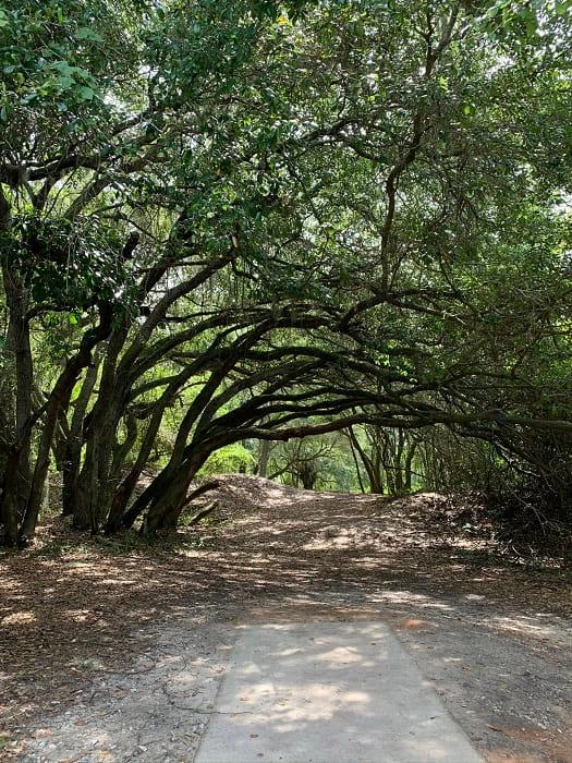 Hiking Trail Polk County (2)