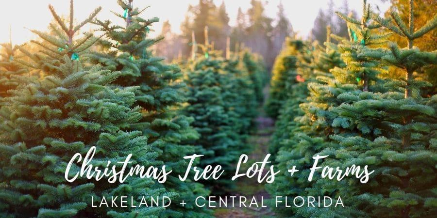 Christmas Tree Lots Lakeland Florida