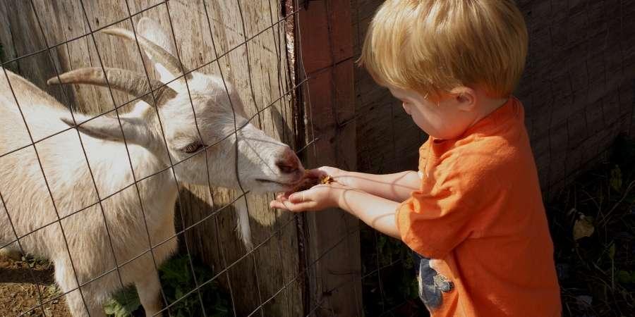 Petting zoos Farms Lakeland Florida